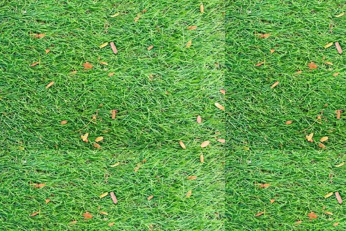 Vinylová Tapeta Pozadí Lawn - Přírodní krásy