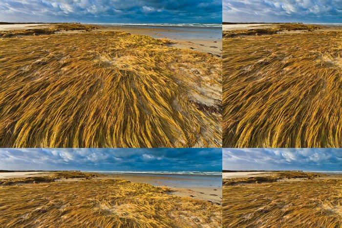 Tapeta Pixerstick Přímořské s duna tráva při západu slunce - Ostrovy