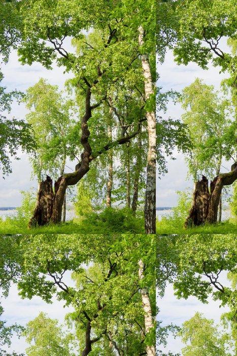 Vinylová Tapeta Přírodní pozadí Letní Výška Idylické Nature - Prázdniny