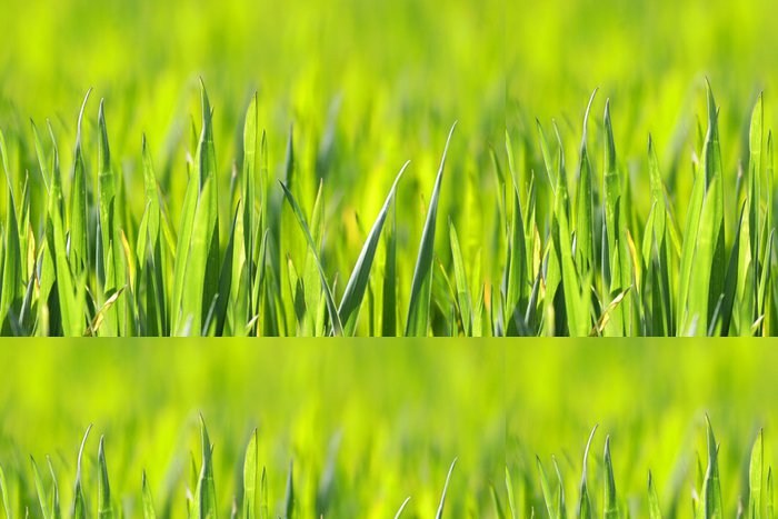 Tapeta Pixerstick Přírodní trávy osvětlena sluncem - Město