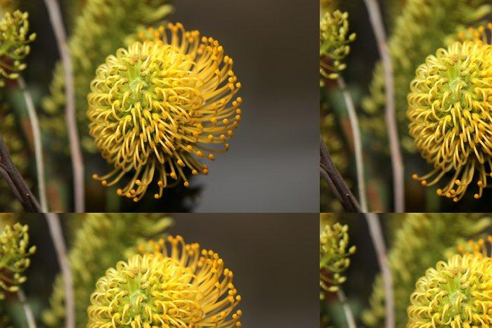 Tapeta Pixerstick Protea květiny - Květiny
