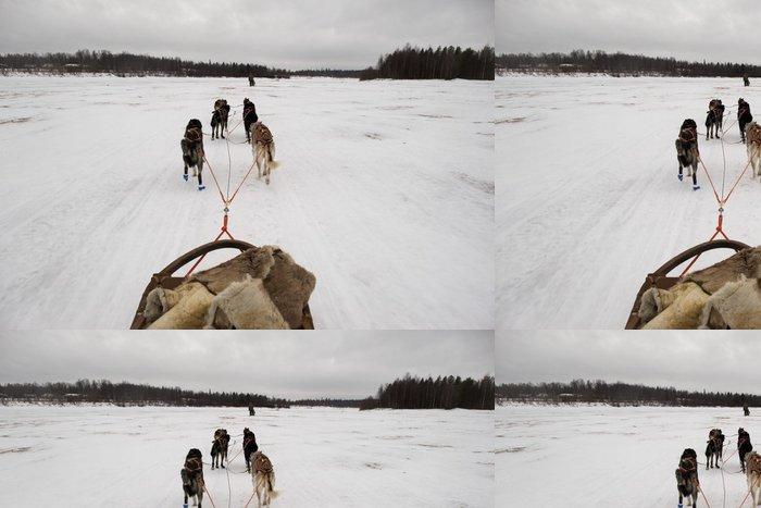 Tapeta Pixerstick Psích spřežení, zatímco běží na sněhu - Savci