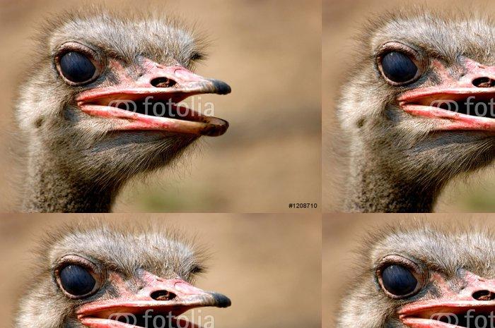 Tapeta Pixerstick Pštros emu - Ptáci