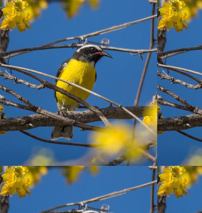 Tapeta Pixerstick Ptáci na žluté květy - Ptáci