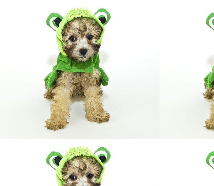 Tapeta Pixerstick Pudl štěně v frog oblečení. - Savci