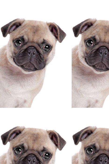 Tapeta Pixerstick Pug dog - Savci