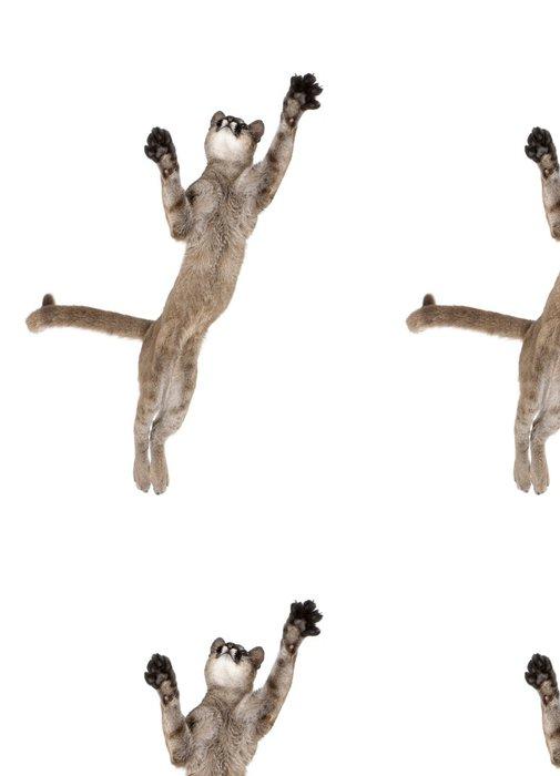 Tapeta Pixerstick Puma mládě, skáče do vzduchu proti bílému pozadí - Savci