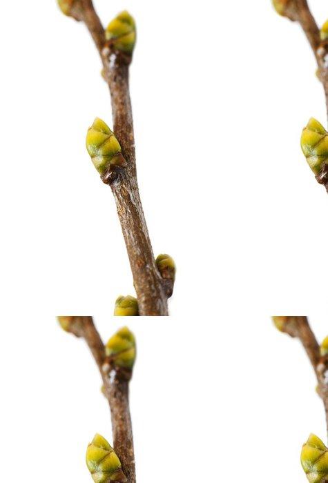 Tapeta Pixerstick Pupeny na pobočce - Rostliny
