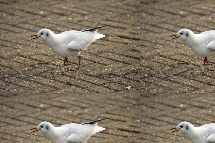 Tapeta Pixerstick Racek chechtavý - Ptáci