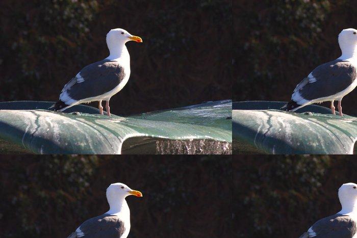 Tapeta Pixerstick Racek stříbřitý - Ptáci
