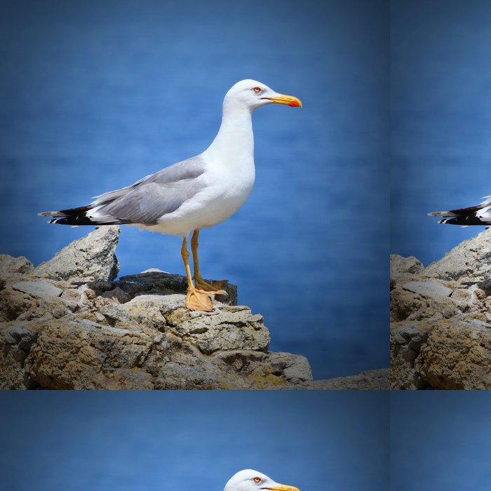 Tapeta Pixerstick Racek - Ptáci
