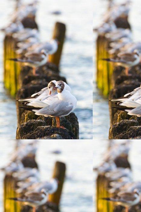 Tapeta Pixerstick Rackové na groynes v příboji na polském pobřeží Baltského moře - Ptáci