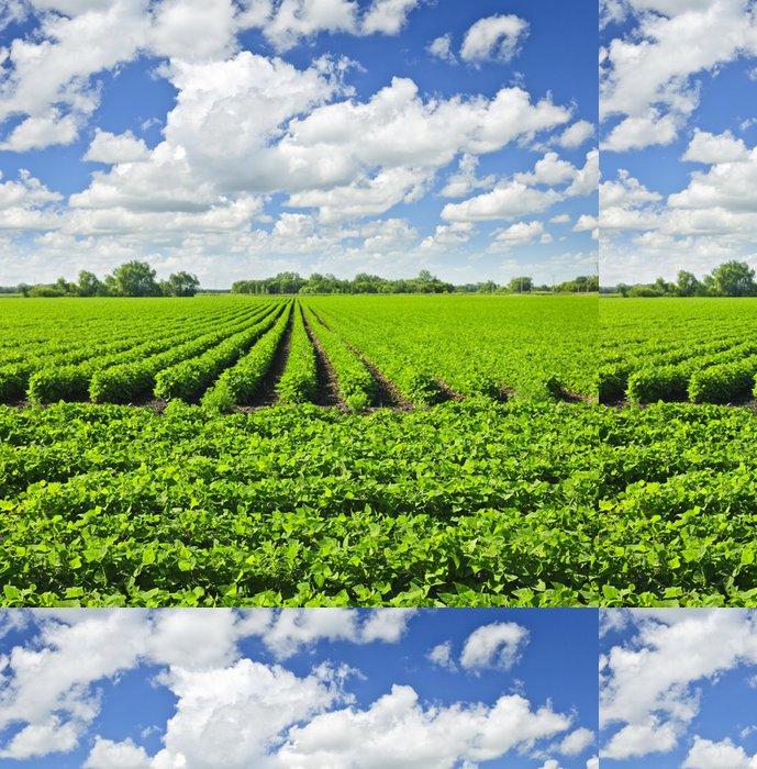 Tapeta Pixerstick Řádky sójových rostlin v oblasti - Zemědělství
