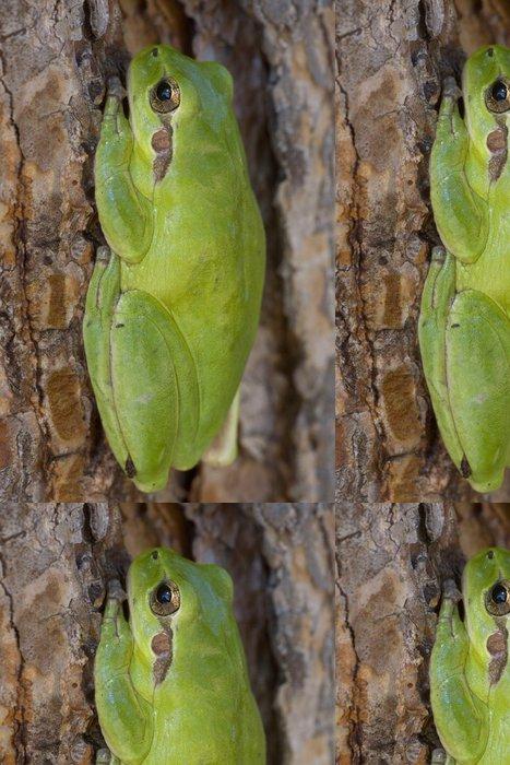 Tapeta Pixerstick Rainette meridionale (Hyla meridionalis) - Ostatní Ostatní