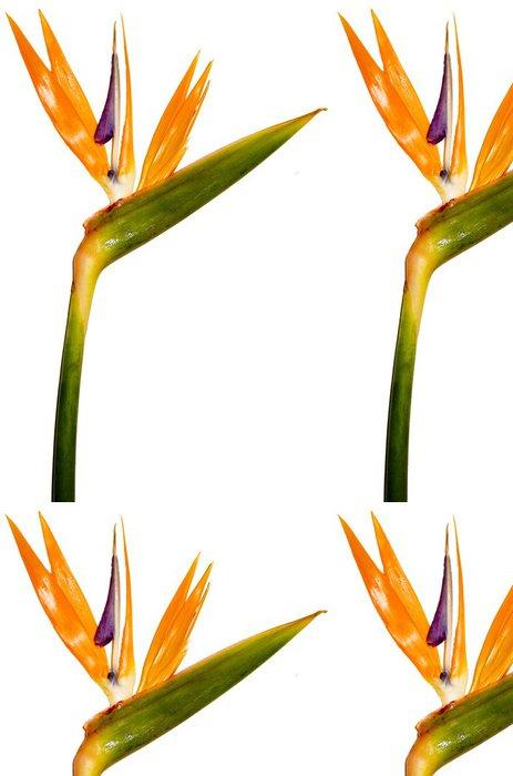 Vinylová Tapeta Rajka, tropické květiny - Květiny