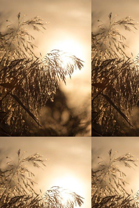 Tapeta Pixerstick Rákosy při západu slunce - Pozadí