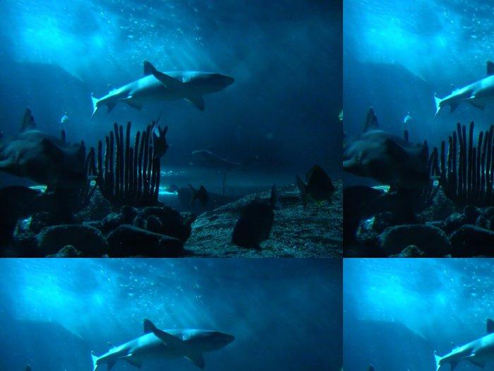 Tapeta Pixerstick žralok - Vodní a mořský život