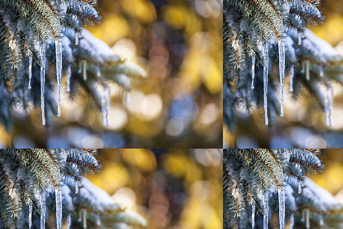 Tapeta Pixerstick Rampouchy na jedle v zimě - Roční období