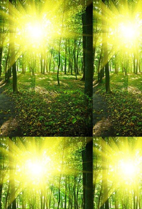 Tapeta Pixerstick Ráno v zeleném parku - Lesy