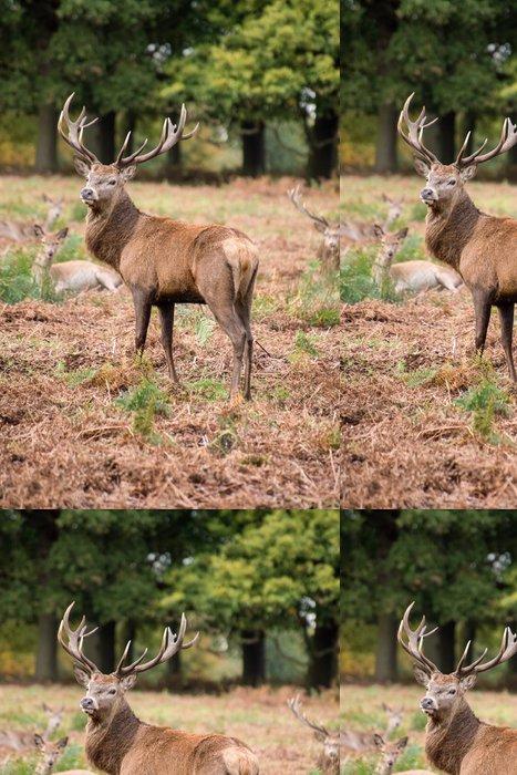 Vinylová Tapeta Red deer jelen v průběhu říje na podzim - Témata