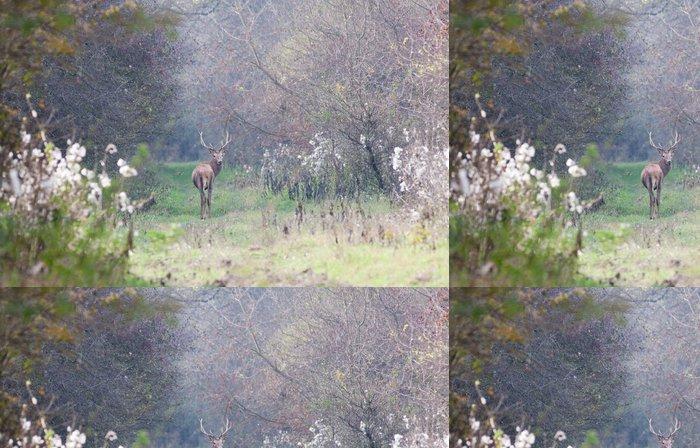 Tapeta Pixerstick Red Deer procházky v lese - Příroda a divočina