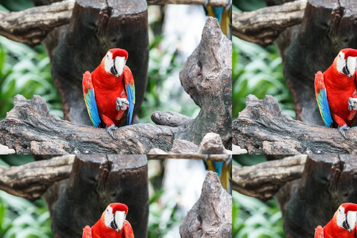 Tapeta Pixerstick Red papoušek sedí na větvi - Ptáci