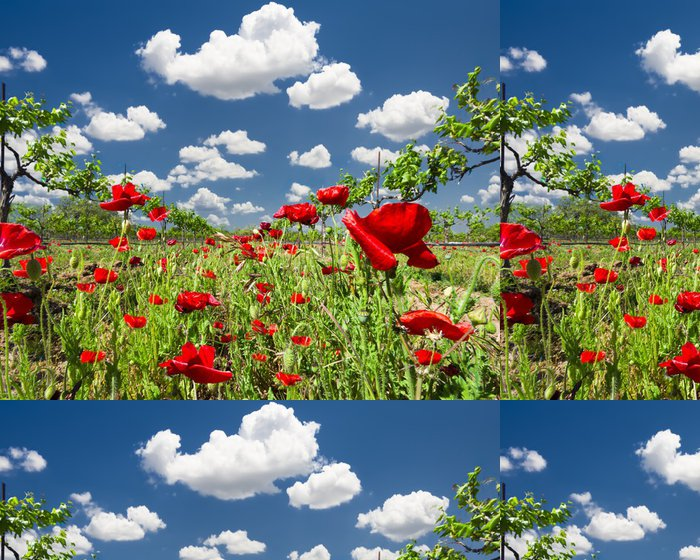 Tapeta Pixerstick Red Poppies v Texas Vineyard - Venkov
