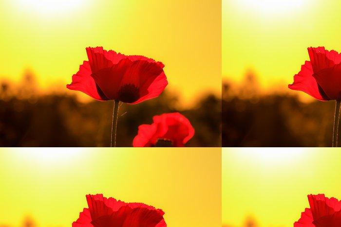Tapeta Pixerstick Red Sunset mák květ - Květiny