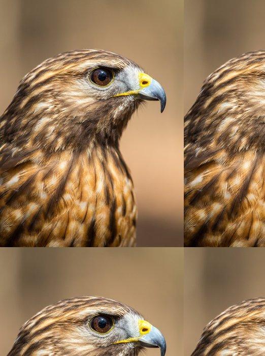 Tapeta Pixerstick Red-tailed Hawk - Ptáci