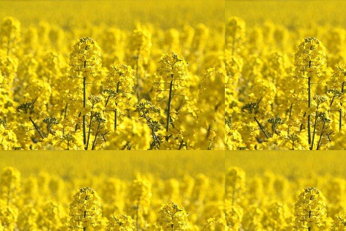 Tapeta Pixerstick Řepka pole nebo řepkový rostlin, zblízka obraz - iStaging