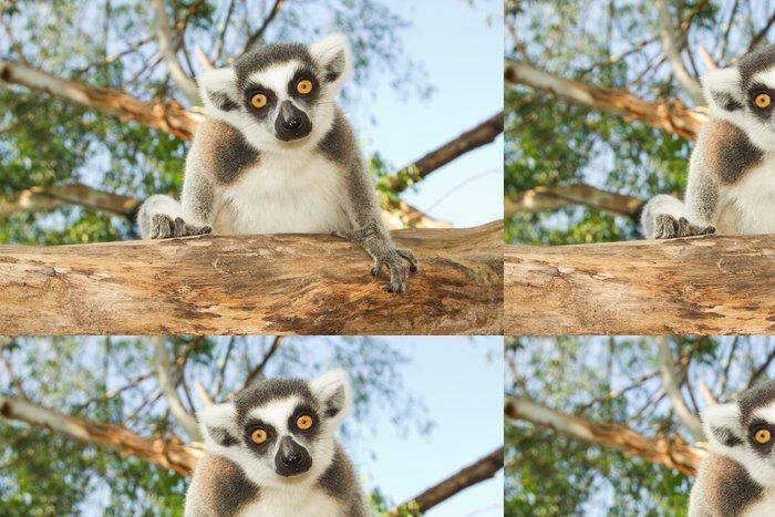 Tapeta Pixerstick Ring-tailed lemur - Savci