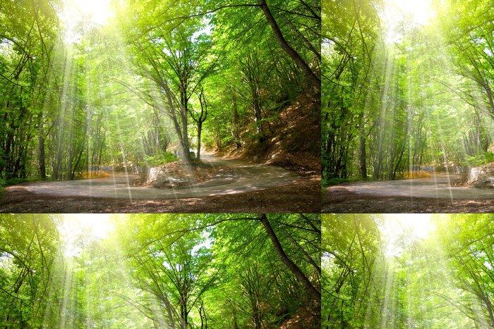Tapeta Pixerstick Road v lese - Roční období