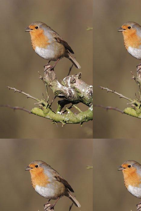Tapeta Pixerstick Robin (Erithacus rubecula) - Ptáci
