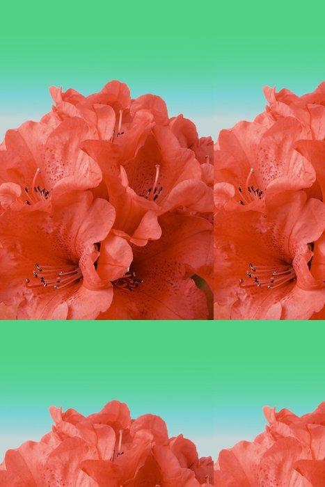 Tapeta Pixerstick Rododendron banda s ořezovou cestou - Životní styl, péče o tělo a krása