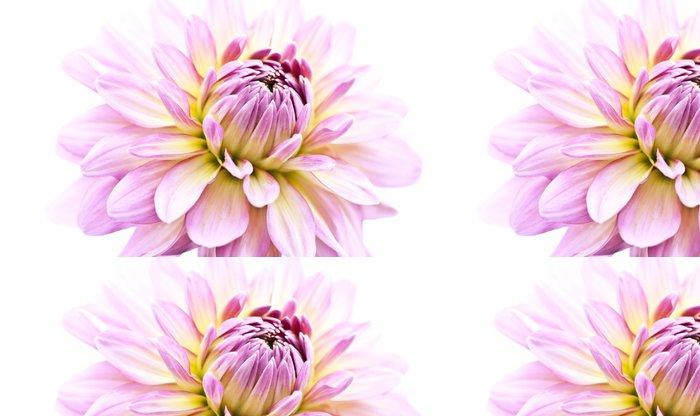 Tapeta Pixerstick Rosa © Matthias Buehner - Květiny
