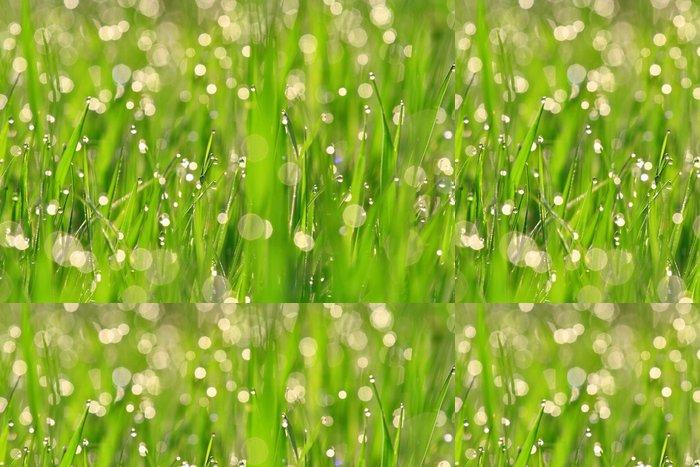 Vinylová Tapeta Rosa na zelené trávě. - Pozadí