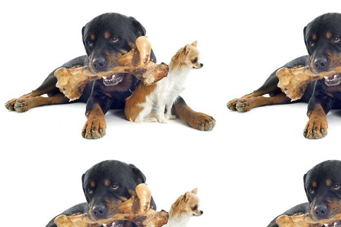 Tapeta Pixerstick Rottweiler, čivava a kostí - Savci