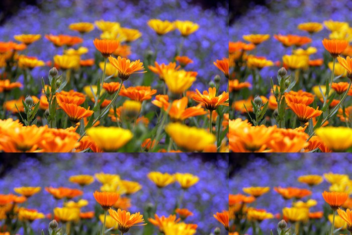 Tapeta Pixerstick Rozkvetlá zahrada - Květiny