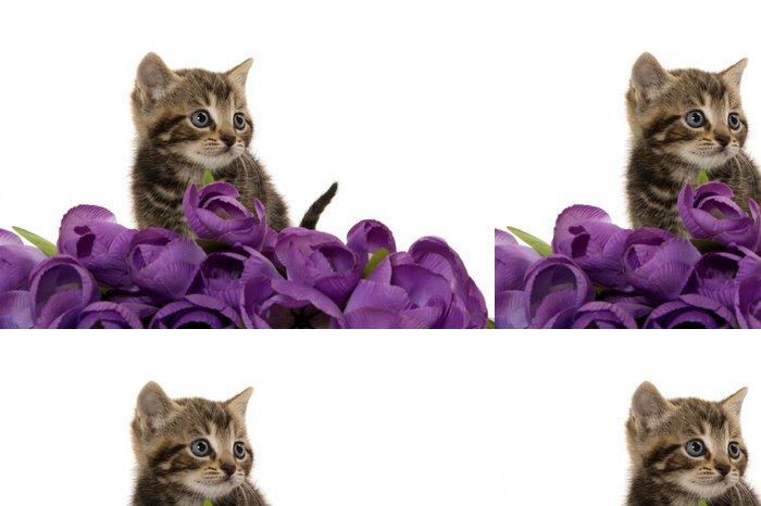 Tapeta Pixerstick Roztomilé kotě s fialovými květy - Savci