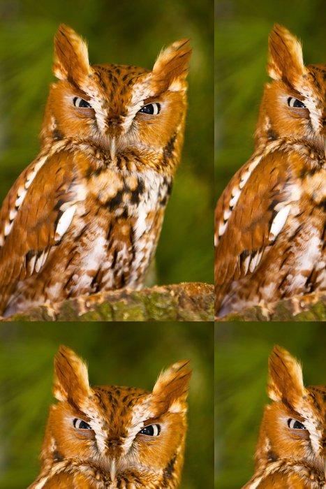 Vinylová Tapeta Rozzlobený pištění Owl Glare - Témata