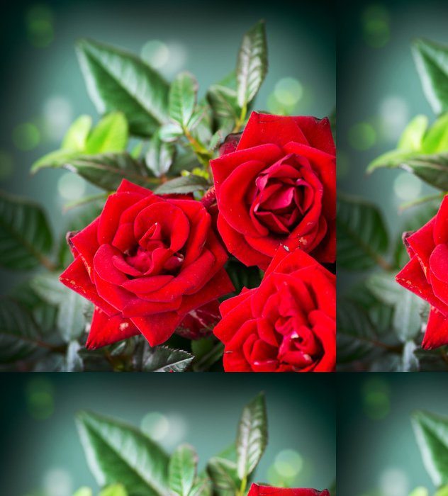 Tapeta Pixerstick Růže květ - Témata