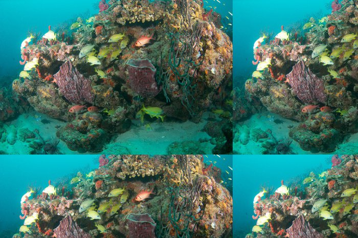 Tapeta Pixerstick Různé druhy chrochtání na korálovém ostrově - Vodní a mořský život