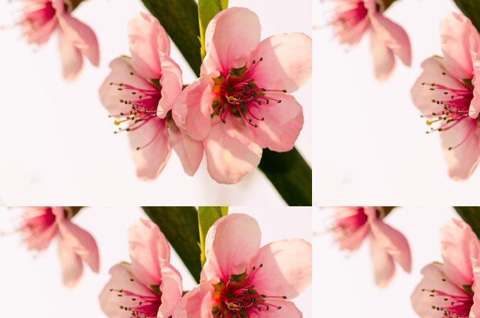 Tapeta Pixerstick Ruzova kvitina - Květiny