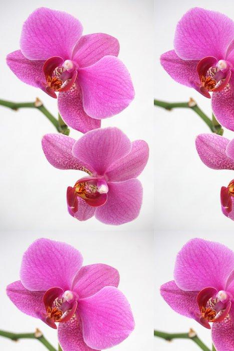 Tapeta Pixerstick Růžová orchidej - Květiny