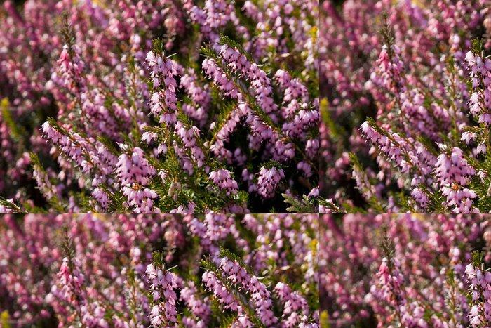 Tapeta Pixerstick Růžová vřes pozadí - Květiny