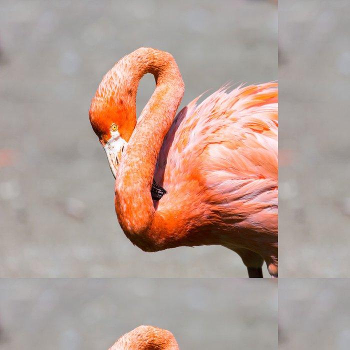 Tapeta Pixerstick Růžové Karibik plameňák. - Ptáci