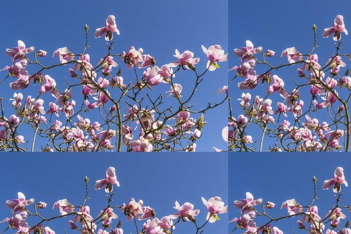 Vinylová Tapeta Růžové květy magnólie na jaře proti modré obloze - Květiny
