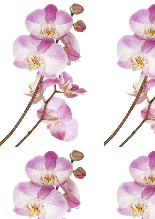 Tapeta Pixerstick Růžové orchideje - Květiny