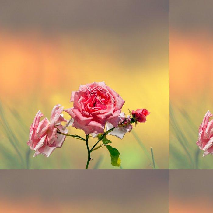 Tapeta Pixerstick Růžové růže na barevné pozadí - Roční období