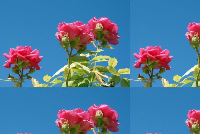 Vinylová Tapeta Růžové růže - Květiny